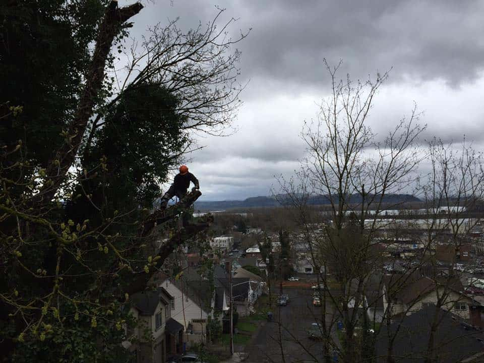 tree removal in portland or